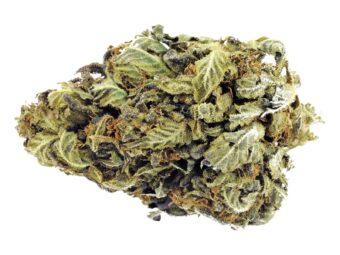 CBD cannabis buds